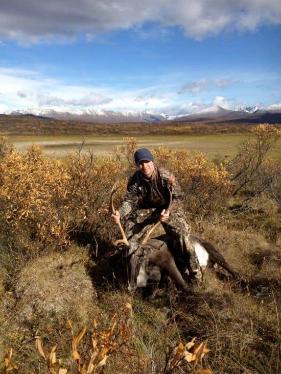 Caribou from Alaska