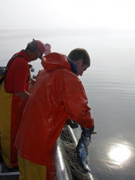 Setnetting Alaska