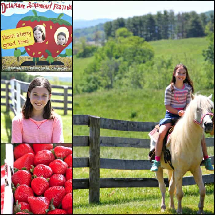 delaplane strawberry festival 3