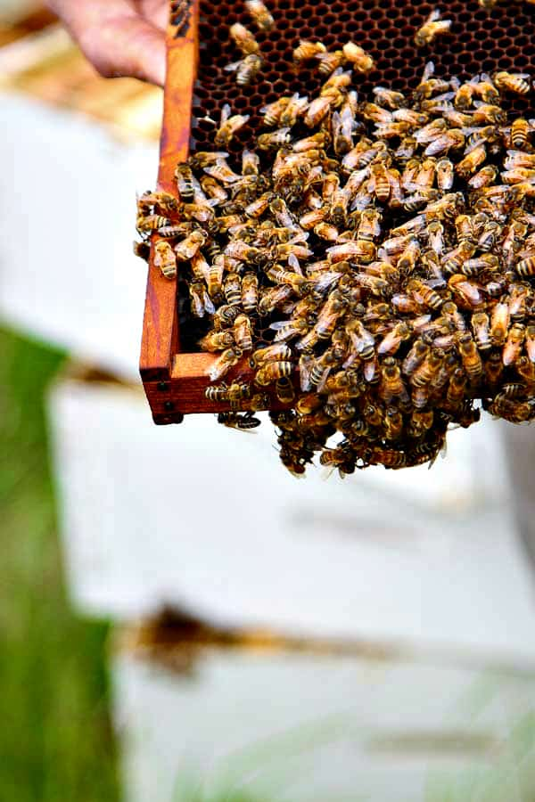 apiary2
