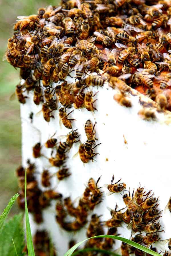 apiary4