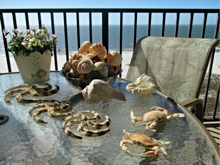 Shells in Florida